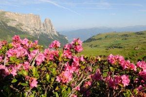 Mountain biking on the Alpe di Siusi 05