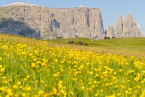 Hiking holidays in South Tyrol 10